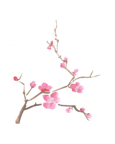 Drawn sakura blossom branch Blossoms Cherry blossom Cherry and