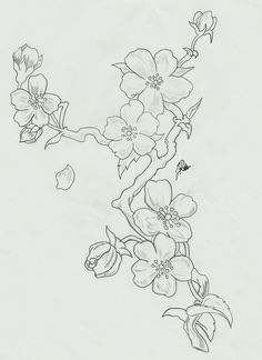 Drawn sakura blossom branch D5gzuwk blossoms Cherry Blossom cherry_blossoms__branch_sketch_by_faytofallstars