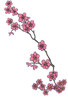 Drawn sakura blossom branch Blossom of High Quality cherry