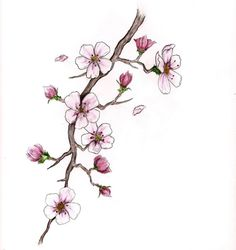Drawn sakura blossom branch Blossom  images Google cherry
