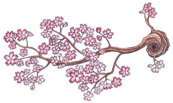 Drawn sakura blossom branch 72 Pinterest 15/7 A