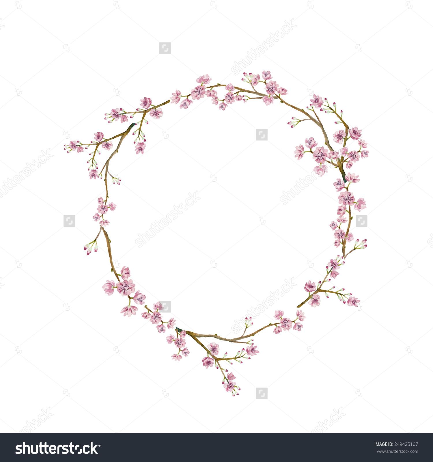 Drawn sakura blossom chery Watercolor sakura vector stock natural