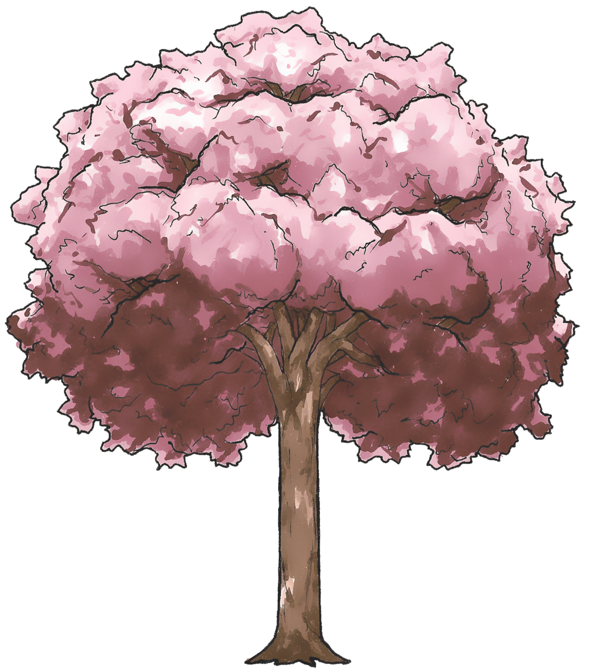 Drawn sakura blossom chibi Blossom and Sakura Vector Blossom