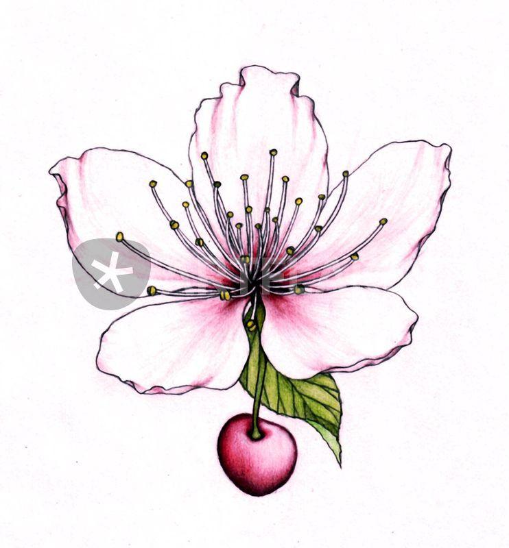 Drawn sakura blossom chinese By  Lovro blossom