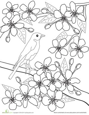 Drawn sakura blossom coloring page Coloring Spring images about on