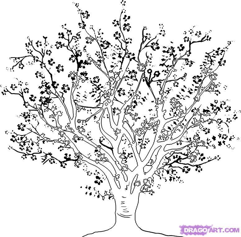 Drawn sakura blossom coloring page Tree on to Pop Step