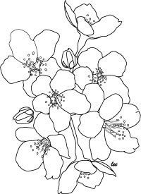 Drawn sakura blossom coloring page Rights floral Blossoms  cherry