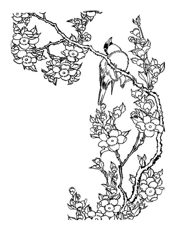 Drawn sakura blossom coloring page Coloring best images Animals Pinterest