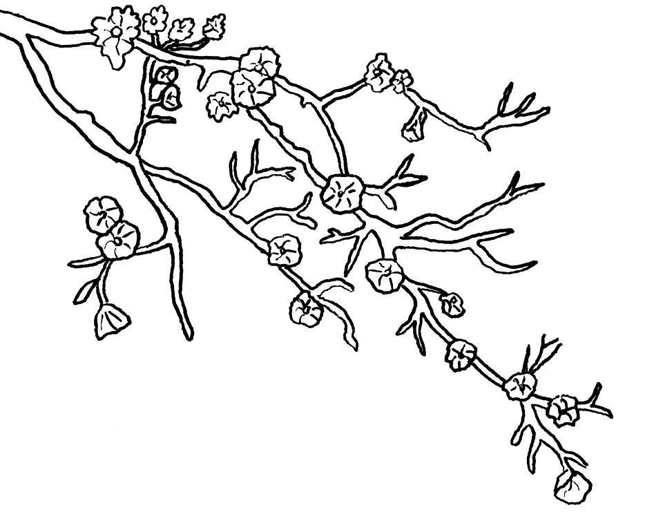 Drawn sakura blossom coloring page Coloring drawings Sakura Blossom coloring