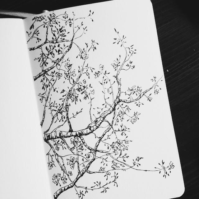 Drawn sakura blossom doodle Liz Blossoms Art Cherry Mary