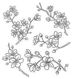 Drawn sakura blossom doodle (and to blossoms a 7