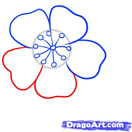 Drawn sakura blossom easy 5 to Draw cherry to