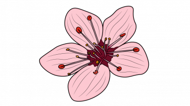 Drawn sakura blossom easy Cherry Blossom Plants How Tree