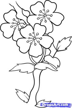 Drawn sakura blossom easy Draw to 7 step Blossoms