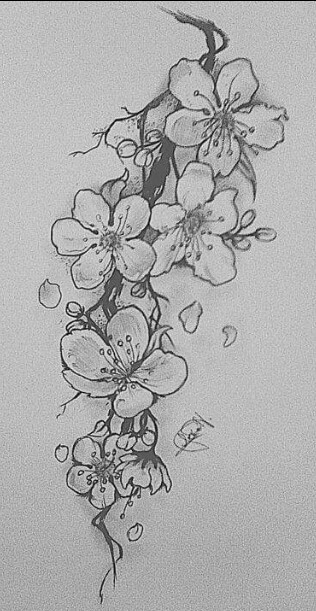 Drawn sakura blossom flower cluster Cherry My Cherry  Pinterest