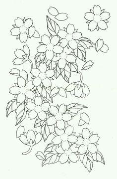 Drawn sakura blossom flower cluster Sakura the Cherry genus Cherry