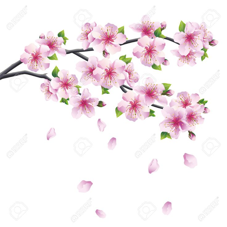 Drawn sakura blossom flower petal Tattoo Google tattoo falling Google