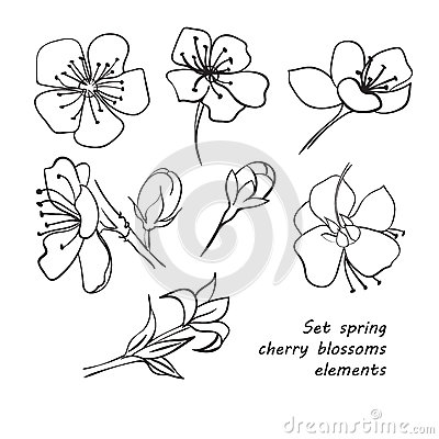 Drawn sakura blossom flower petal Hand spring Set drawing flowers