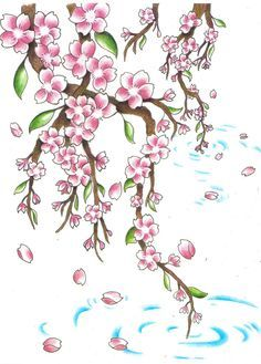 Drawn sakura blossom flower petal Pinterest dla cherry drawing cherry
