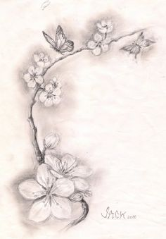 Drawn sakura blossom flower petal Cherry blossoms Peach Peach Tattoo