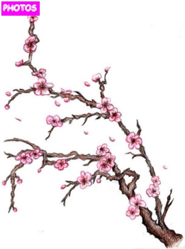 Drawn sakura blossom flowering tree  tree tree blossom Wall