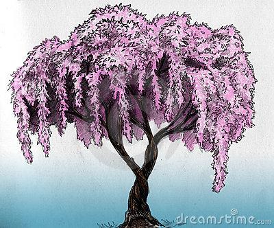 Drawn sakura blossom flowering tree Blossom sketch plum (cherry in