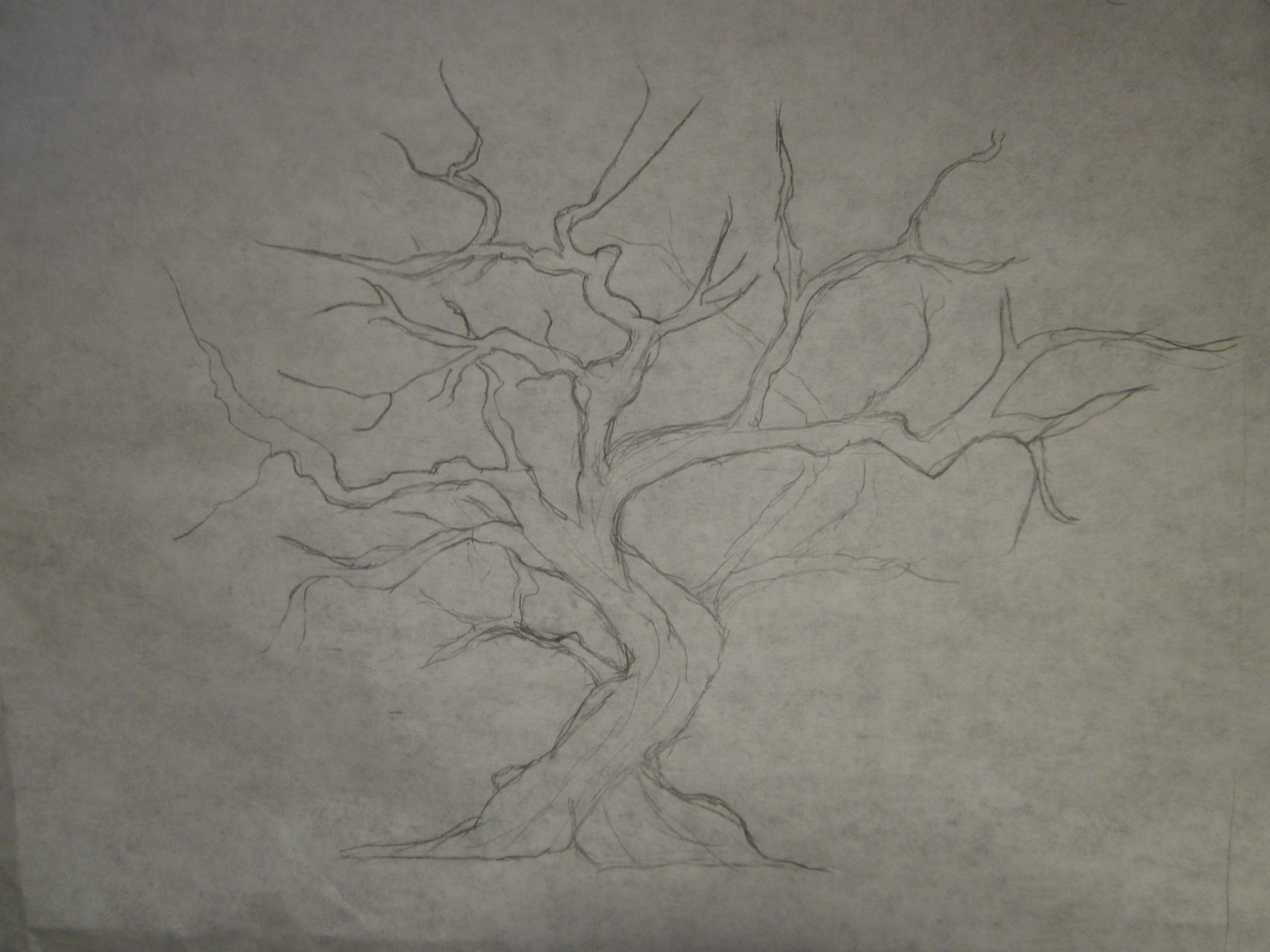 Drawn sakura blossom flowering tree Drawing rough the information Pencil