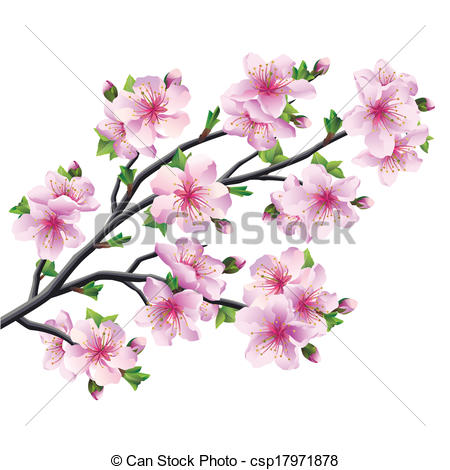 Drawn sakura blossom graphic Tree sakura blossom Vectors blossom