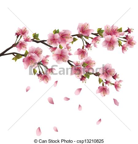 Drawn sakura blossom graphic Japanese cherry tree Illustration