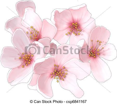 Drawn sakura blossom graphic  Illustrations Blossom Stock Blossom