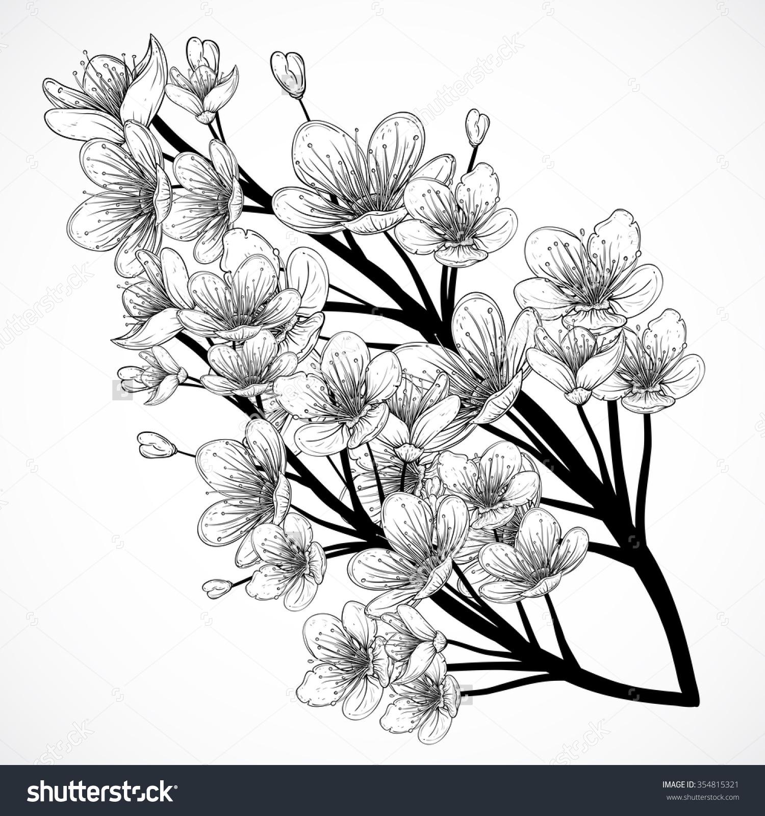 Drawn sakura blossom hand drawn  Art vector hand Pin