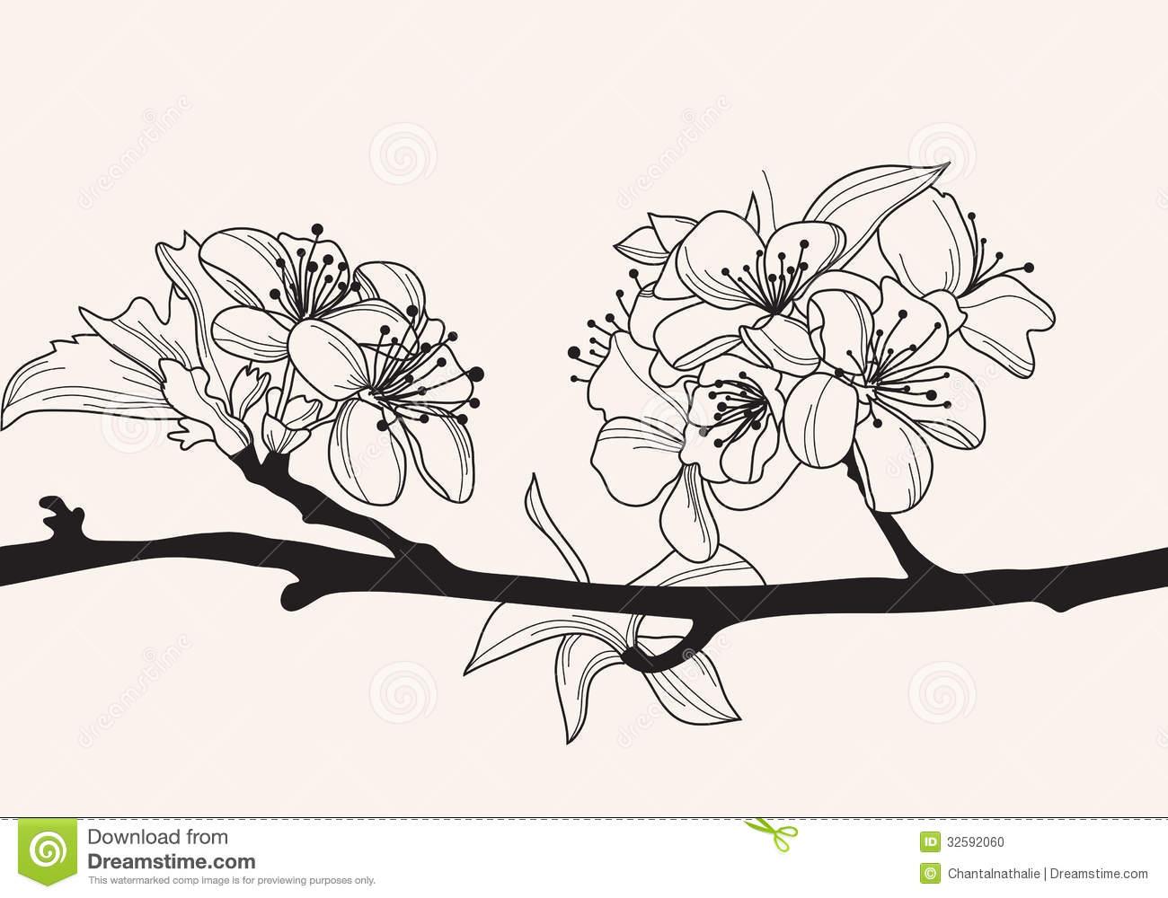 Drawn sakura blossom hand drawn 32592060 best blossom on hand