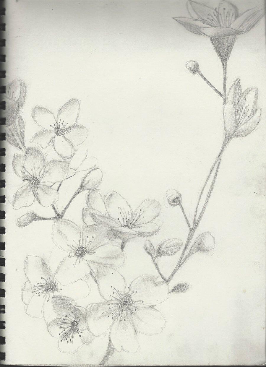 Drawn sakura blossom hand drawn Google sketch Search sketch and