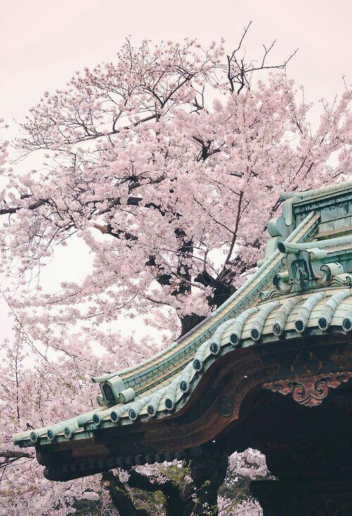 Drawn sakura blossom japanese building Japanese Blossoms blossoms ideas 25+