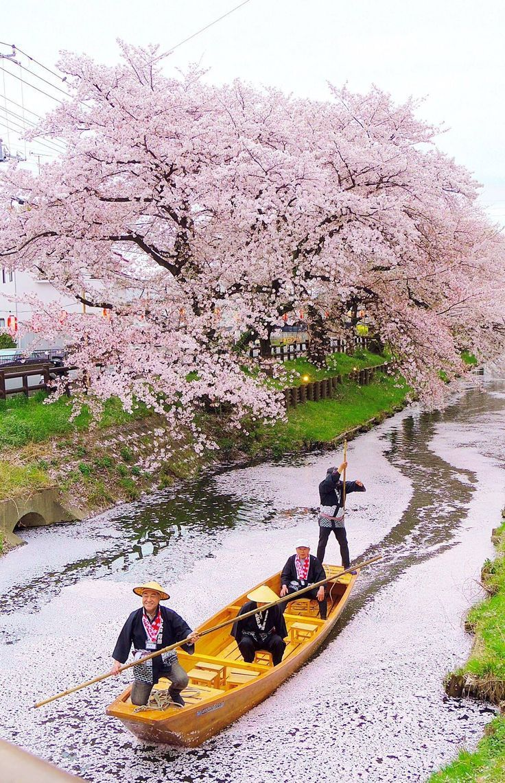 Drawn sakura blossom japanese building Japanese Find Pin ideas blossom
