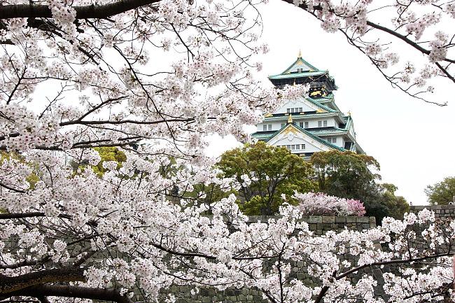 Drawn sakura blossom japanese building Osaka surrounded Bloom Cherry Blossom