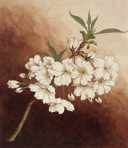 Drawn sakura blossom japanese building Cherry The An Illustrated World
