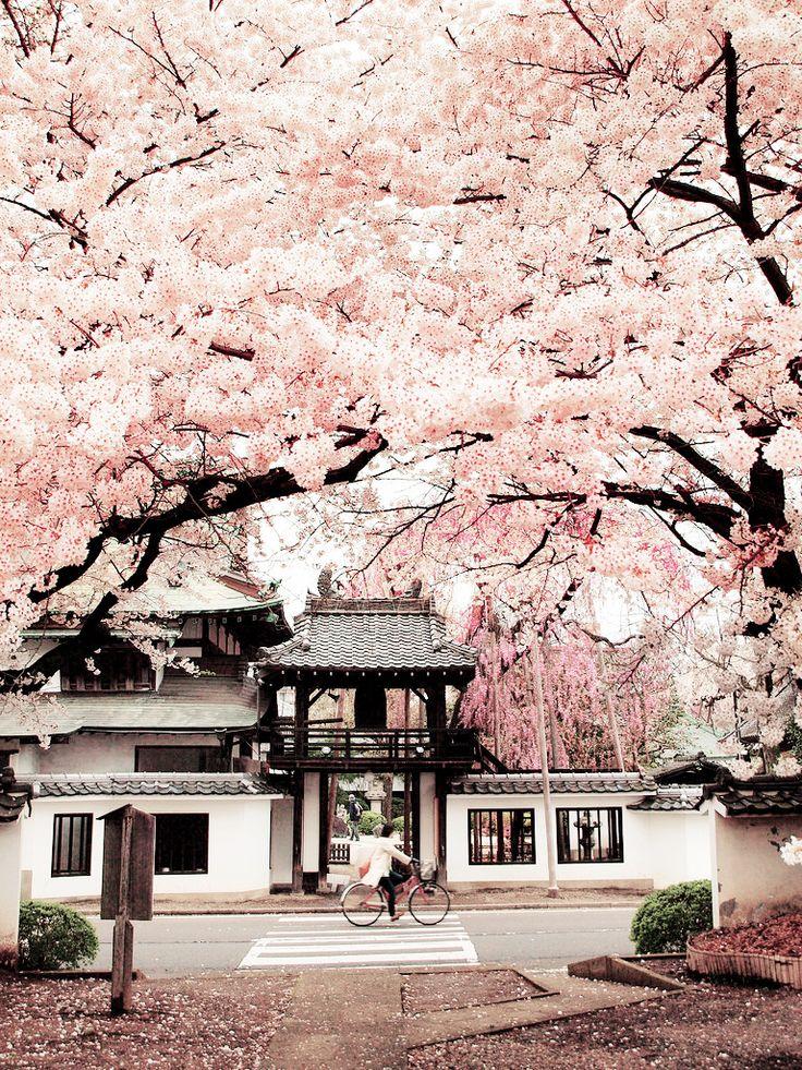 Drawn sakura blossom japanese building On Sendai Miyagi blossoms Pinterest