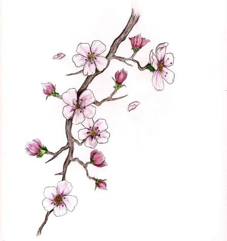 Drawn sakura blossom japanese plant Blossom on Pinterest images best