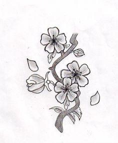Drawn sakura blossom japanese writing White  drawing cherry black