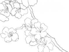 Drawn sakura blossom japenese And paint  craft White)
