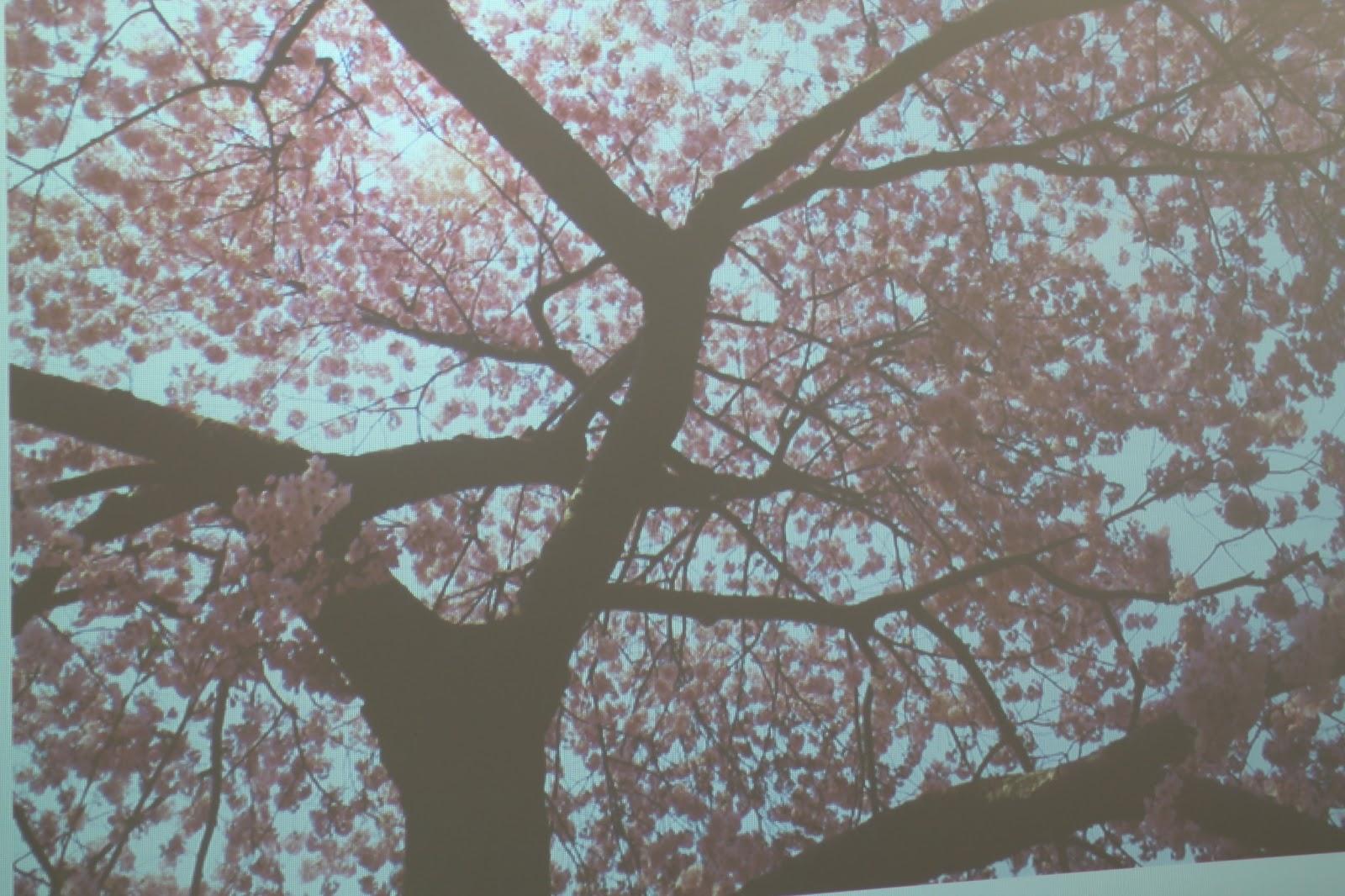 Drawn sakura blossom letter art Kindergarten short using Trees letters