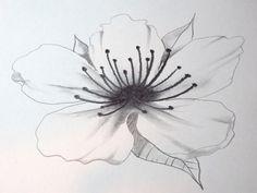Drawn sakura blossom line drawing Branding Line Pinterest Draw Cherry