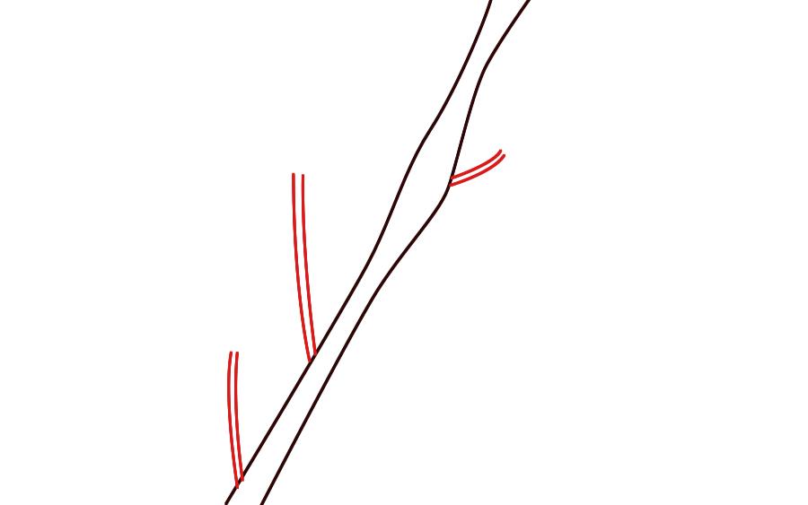 Drawn sakura blossom line drawing Draw need Draw attached a