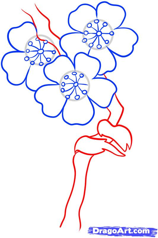 Drawn sakura blossom line drawing Step Draw  by draw