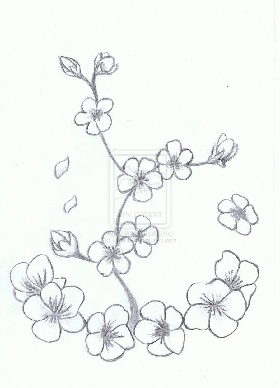 Drawn sakura blossom line drawing Pages Version Branch Draw Blossom