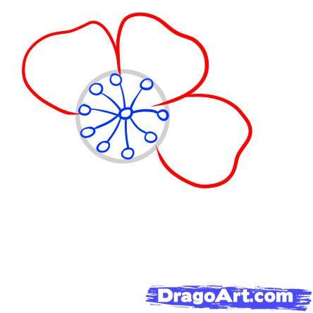 Drawn sakura blossom line drawing Draw How Flowers a draw