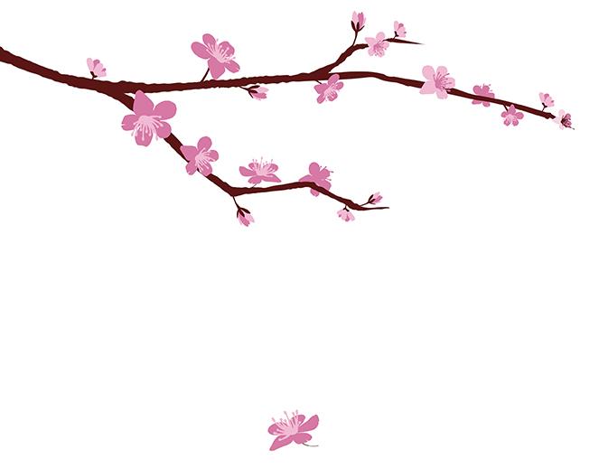 Drawn sakura blossom logo Annual Blossom  Cherry Festival