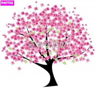Drawn sakura blossom nice tree Blossom Cherry Drawing Blossom Cherry