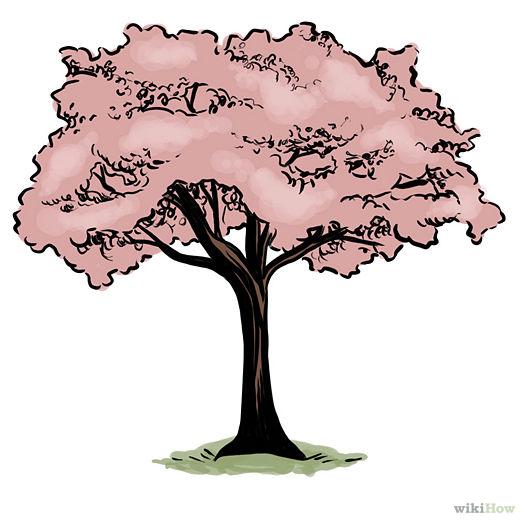 Drawn sakura blossom nice tree A Vectors Silhouettes Svg How